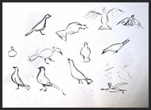 быстрый набросок голубей