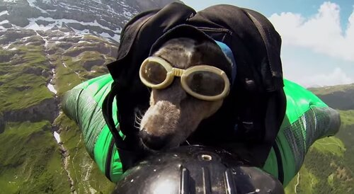 Летающий пес Виспер