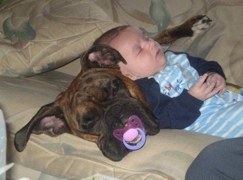 животные спят