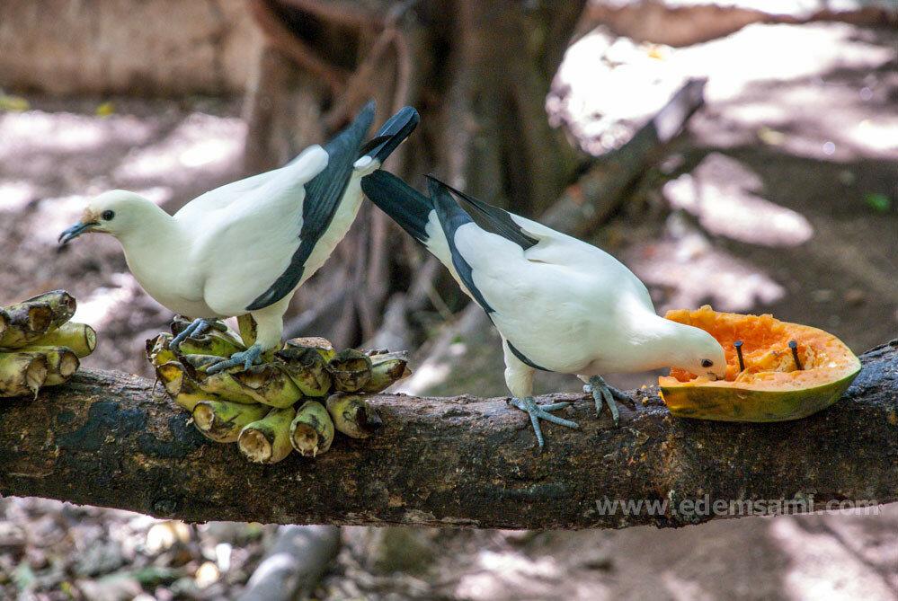 Птичник в Кхао Кхео