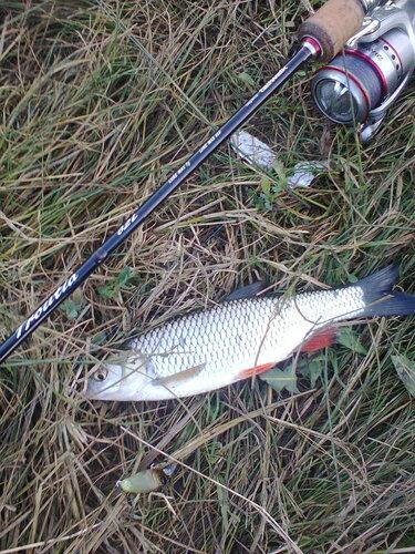 рыболовные места батайск
