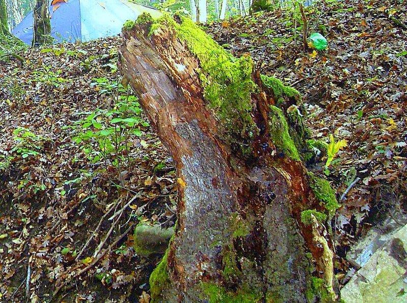 В лесу, под Горячим Ключом, на слёте.... (194).JPG