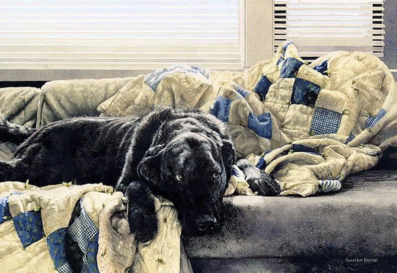 Домашние животные Sueellen Ross