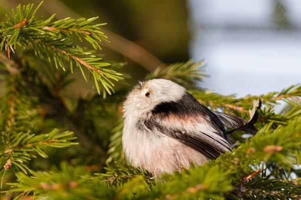 Открытки Всемирный день дикой природы. С праздником вас