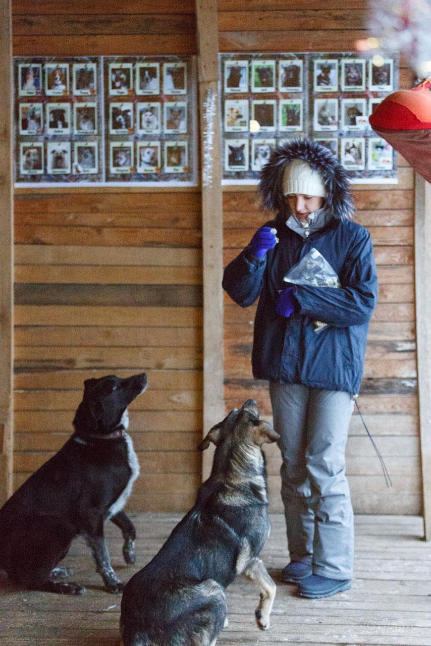 Руна из приюта догпорт фото