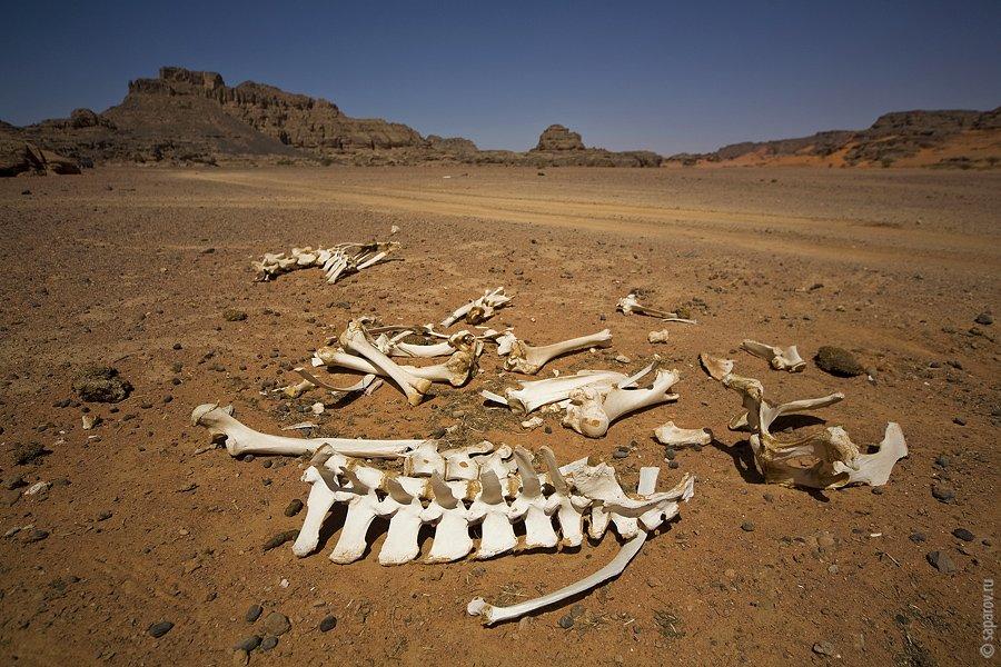 пустыня самый большой пустыни сахар Сахара желтый скалы