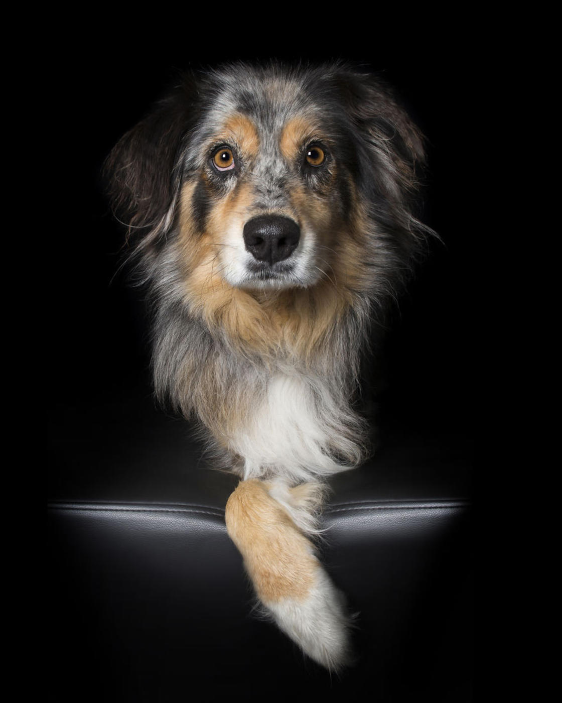Perfect Imperfection – Photographer captures adorable portraits of rescued dogs