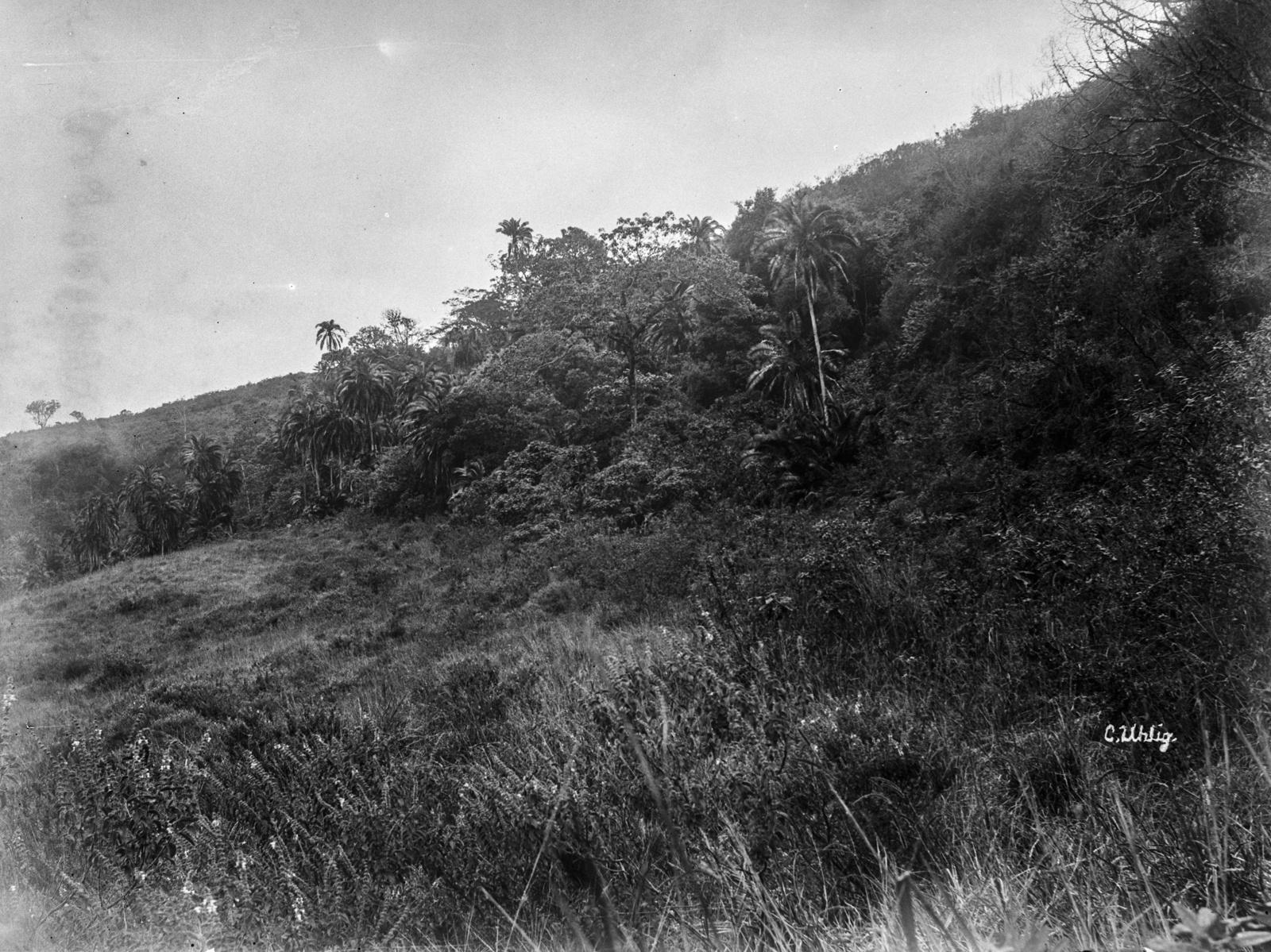 142. Вид горного склона на границе тропического леса при подъеме на вершину Меру
