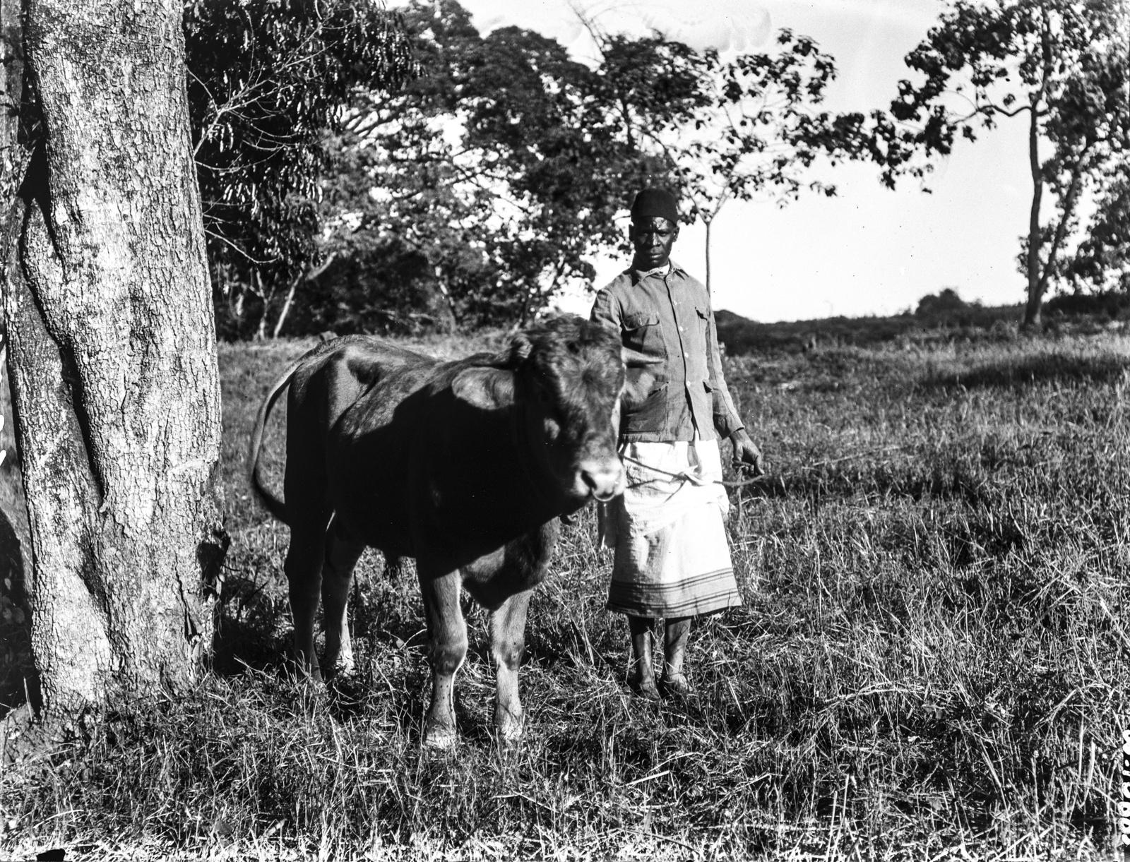 226. Человек с быком