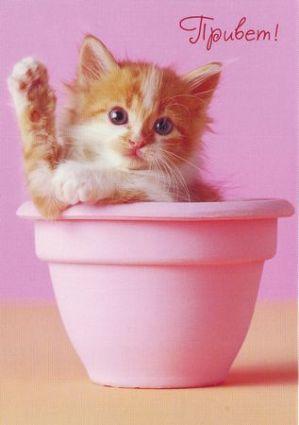 Открытки. Международный день приветствий. Рыжий котенок