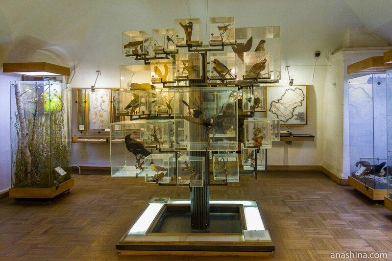 Усадьба Золотаревых-Кологривовых, Калужский краеведческий музей