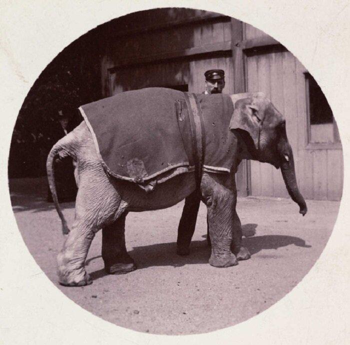 Эротические фотографии смоленского кодака 19 фотография