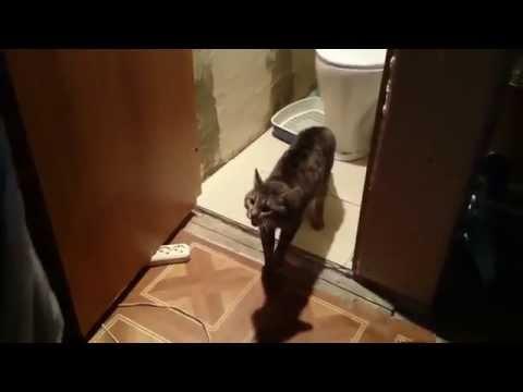 Суровый охранник туалета