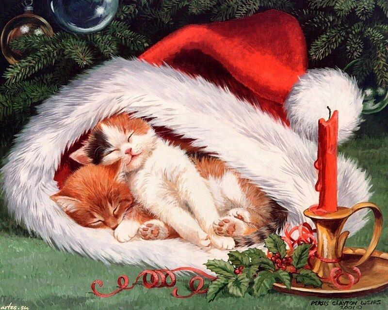 Новогодние котята.jpg. О проказниках кошках. Где угодно кошки спят! Кошки спят, где захотят!