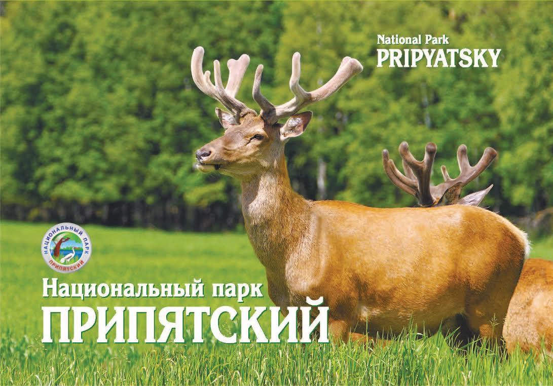 Картинки природы и парка