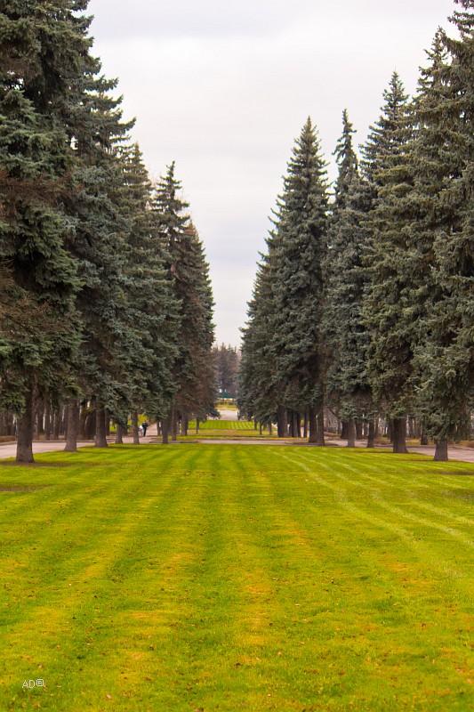 Сквер на улице Косыгина