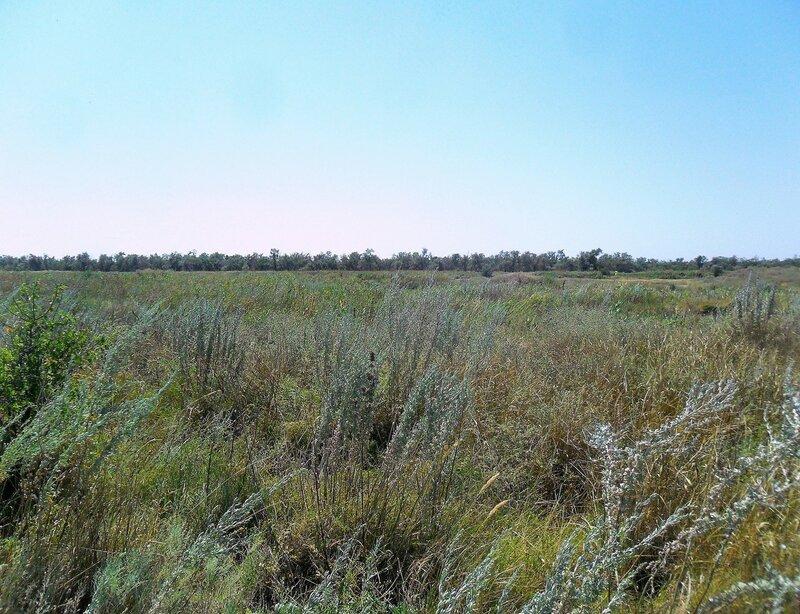 Травы ... особенно полынь ... SAM_8998.JPG
