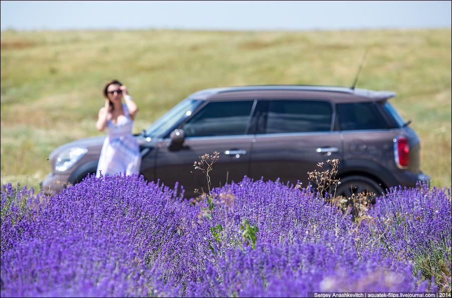 Лавандовые поля в Крыму
