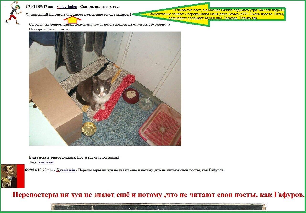 Русская брюнетка теребонькает в своей квартире на веб камеру