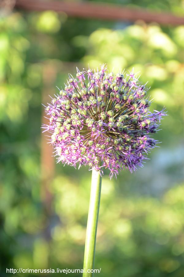 цветок в лучах солнца