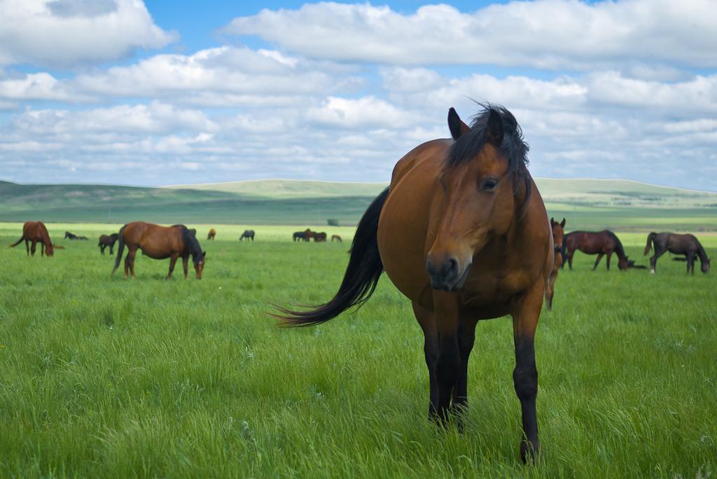 Еще один портрет лошади.