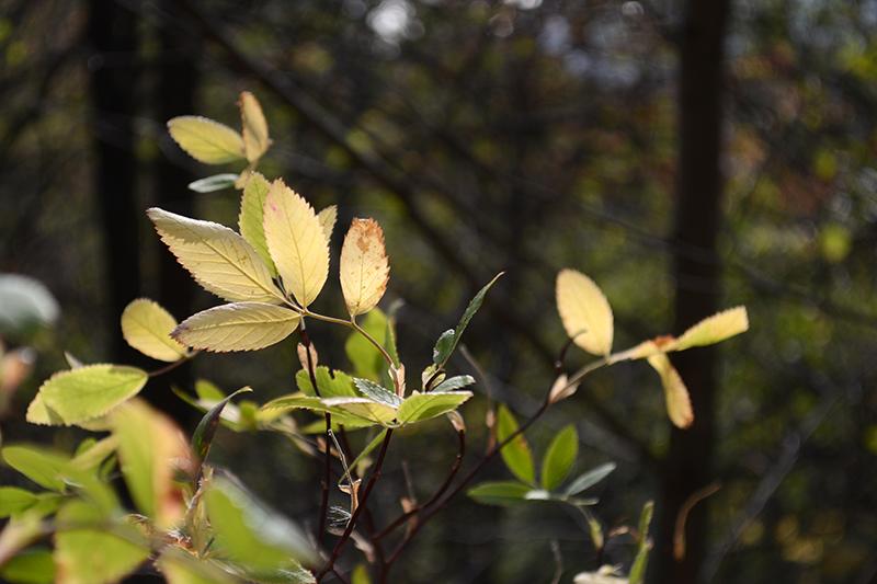 зеленая осень7