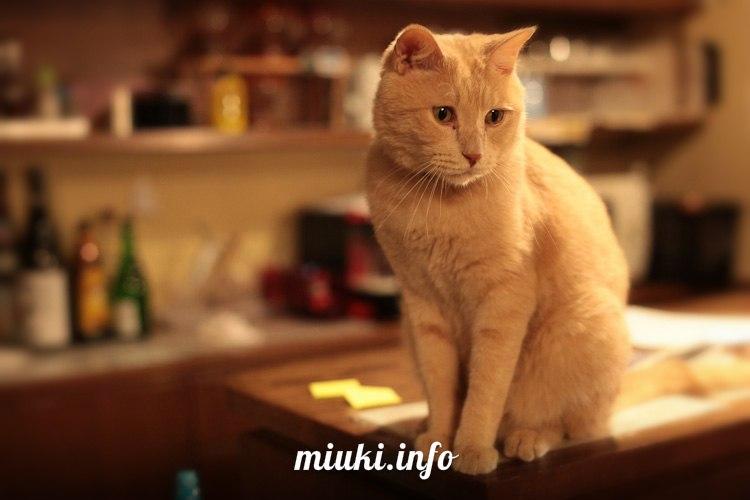 Кошачье кафе в Осаке