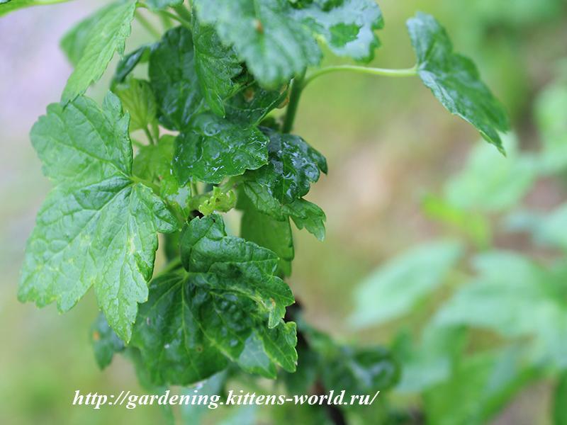Как помогли БИО препараты для сада-Энергетический дождь