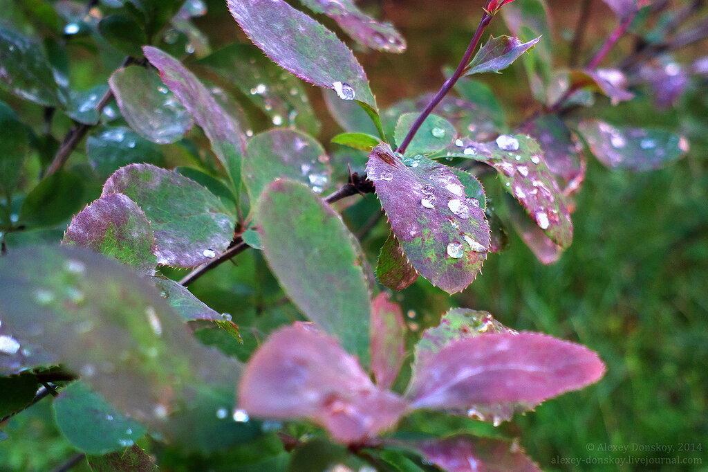 Барбарисово-дождливый позитив