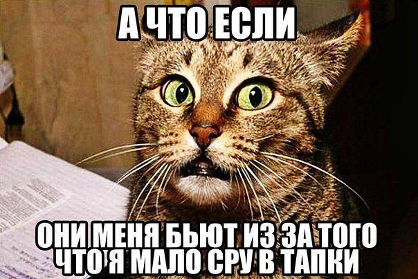 0_12c981_da95a367_orig.jpg