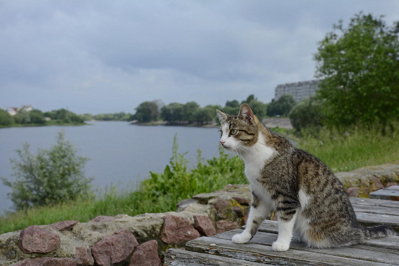 Кошка на озере в 5-м микрорайоне. Гомель