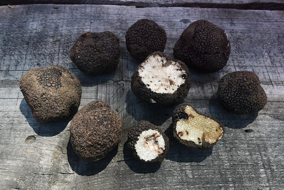 16. Русский черный трюфель Этот деликатесный гриб растет не только в Европе. Он нередко встречается