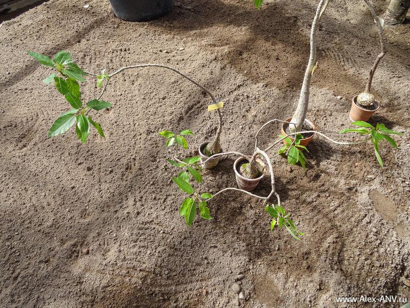 Некоторые растения уже не помещаются в свои горшки.