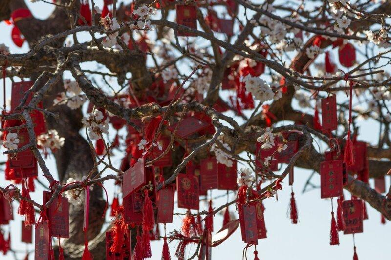 Цветы и желания, парк Сяншань, Пекин