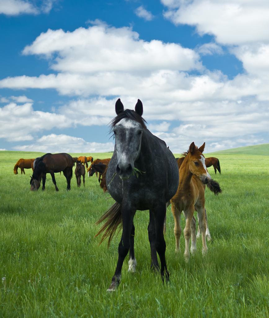 Портрет. Съемка лошадей на Nikon D5100 и светосильный зум Nikon 17-55mm f/2.8.