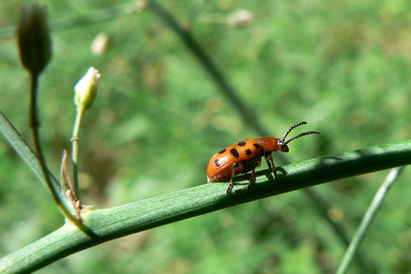 лето жук