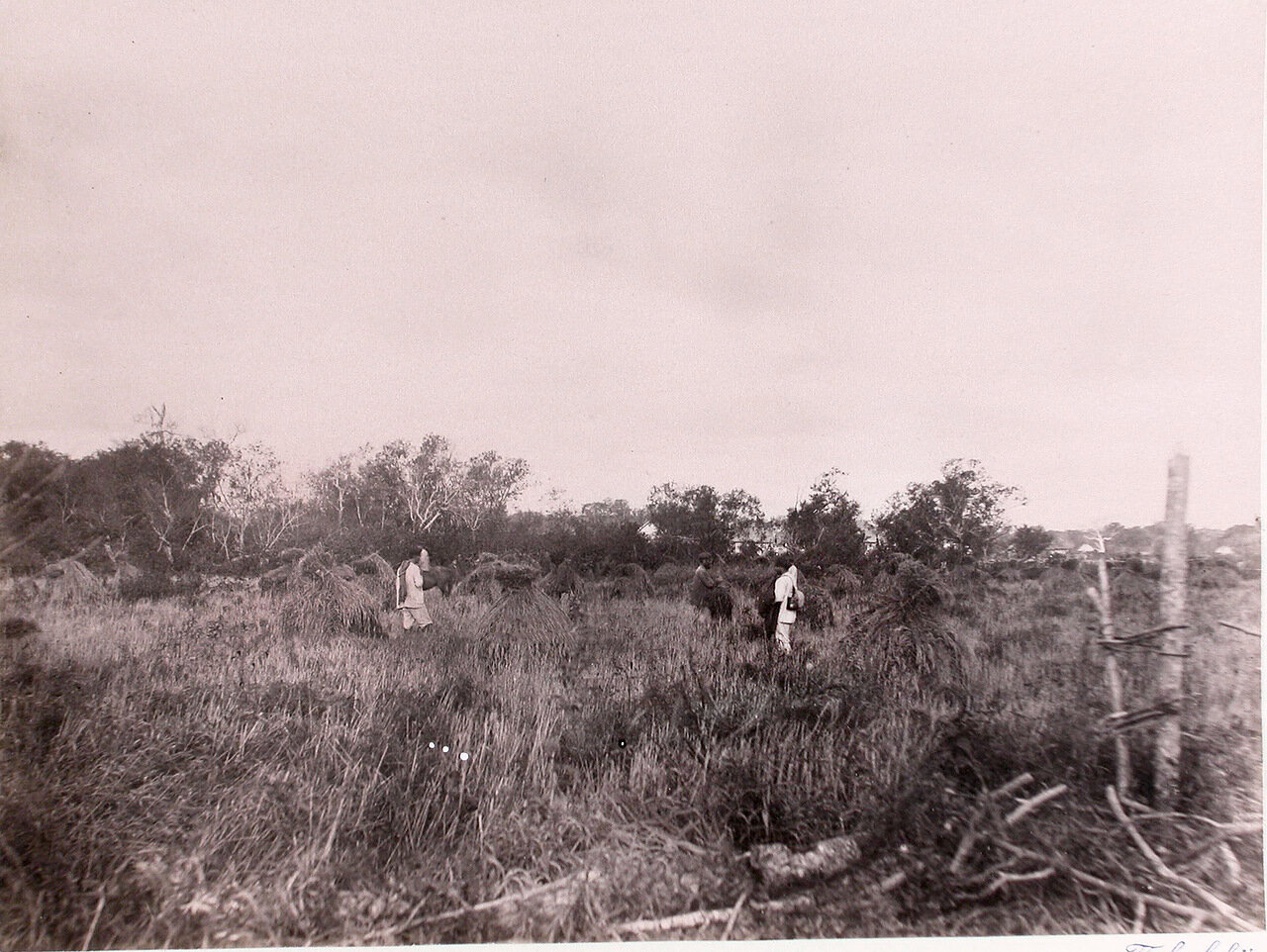 52. Поселенцы во время уборки хлеба