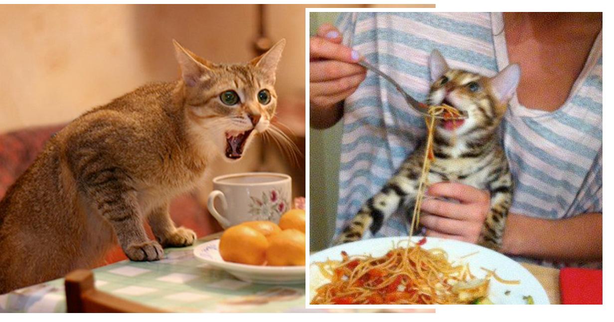 кормить кошек едой со стола фото