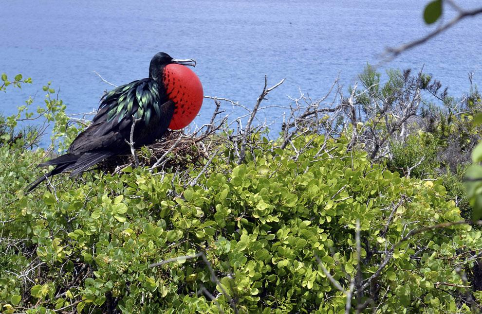 Поля папоротников на острове Исабела. (Фото AP Photo | Google):