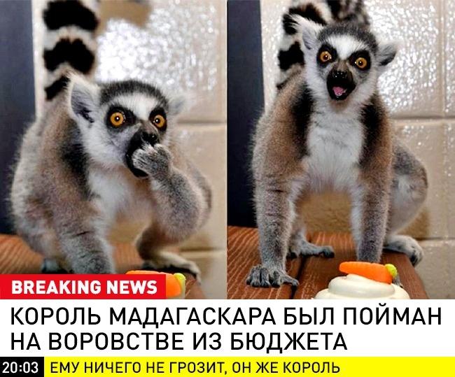 © breaking_animal / vk      Назлобу дня...
