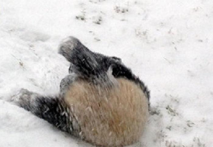 А снег идёт: забавные фотографии животных, которые в первый раз увидели снег