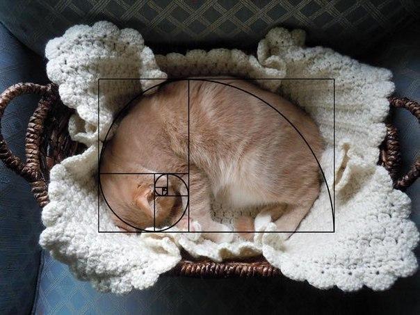 Вот почему все любят котов