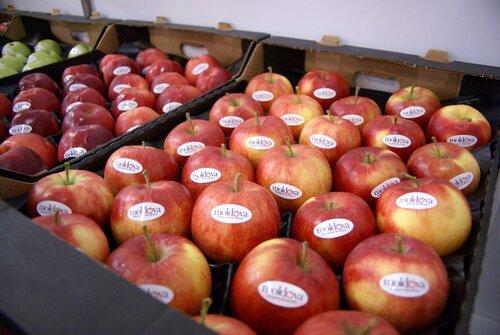 Предприятия Молдовы смогут отправлять свои фрукты в Россию