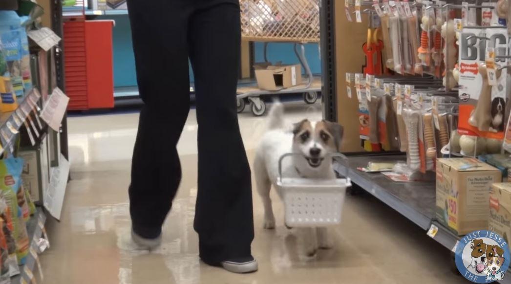Собака помощник, друг и умница