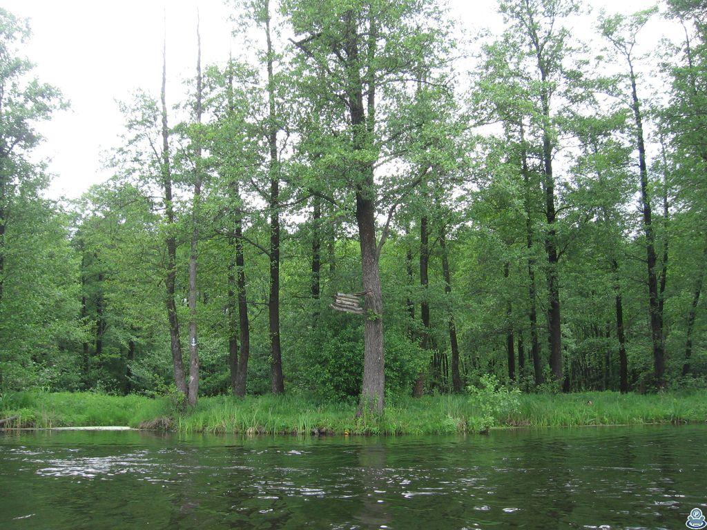 Знаки на деревьях