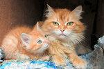 Солнышко с котятами и Лула https://youtu.be/NtkO_g2x8NU