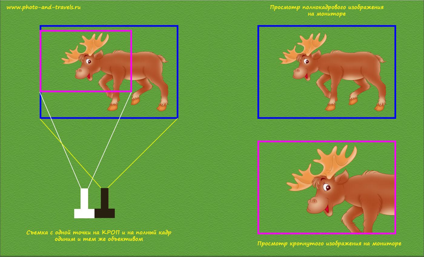 Фото 10. Эффект «увеличения», возникающий во время фотоохоты с использованием полного кадра (а) и кропа (б).