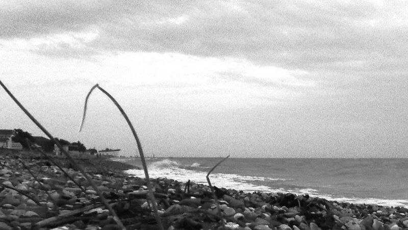 На берегу, у залива ... SAM_0162 -02.JPG
