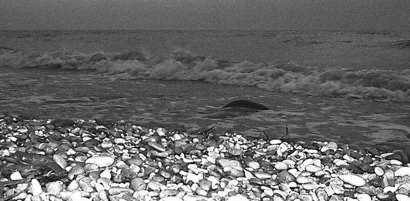 Прибой, у берега каменистого ... SAM_0165.JPG