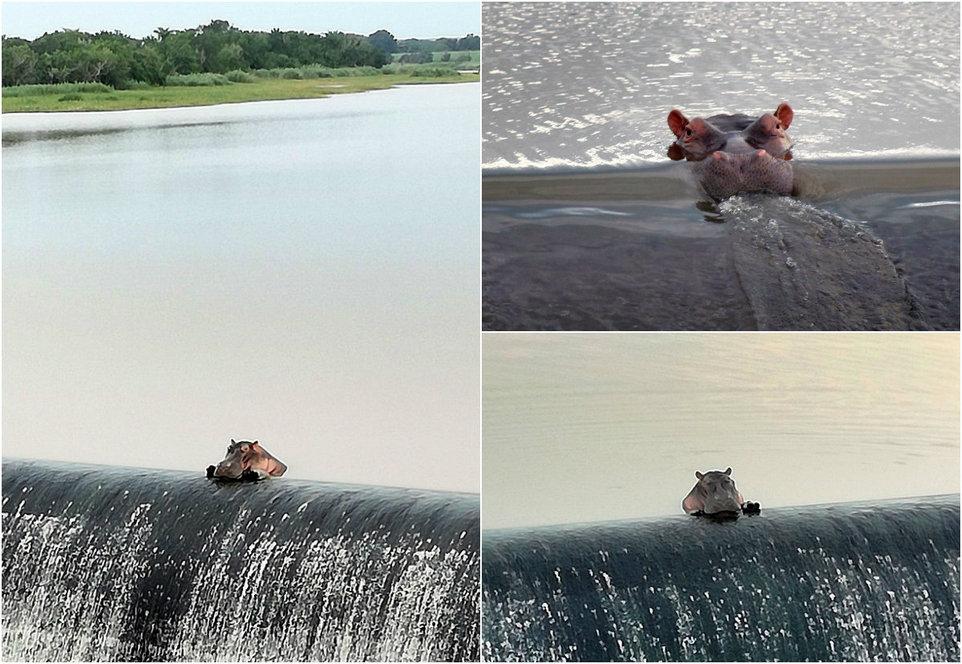 Бегемот отдыхает около водопада